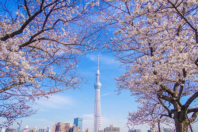 스미다공원에서 보이는 도쿄 스카이트리