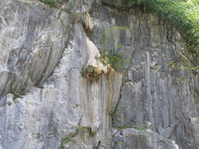 Lion's Nose (Shishi-ga-hana)