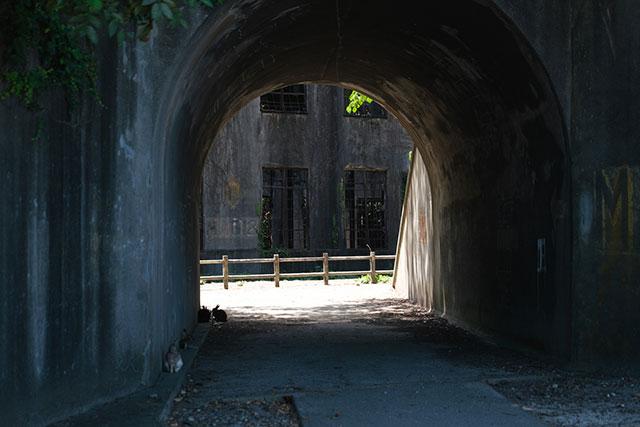 歴史を感じさせるトンネル、先にあるのは発電場跡