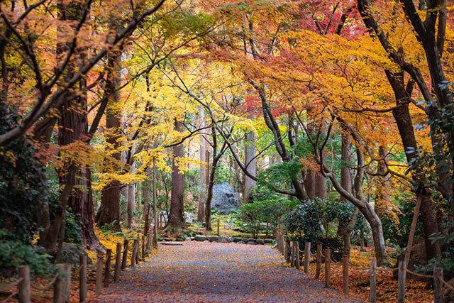 Autumn: October to December