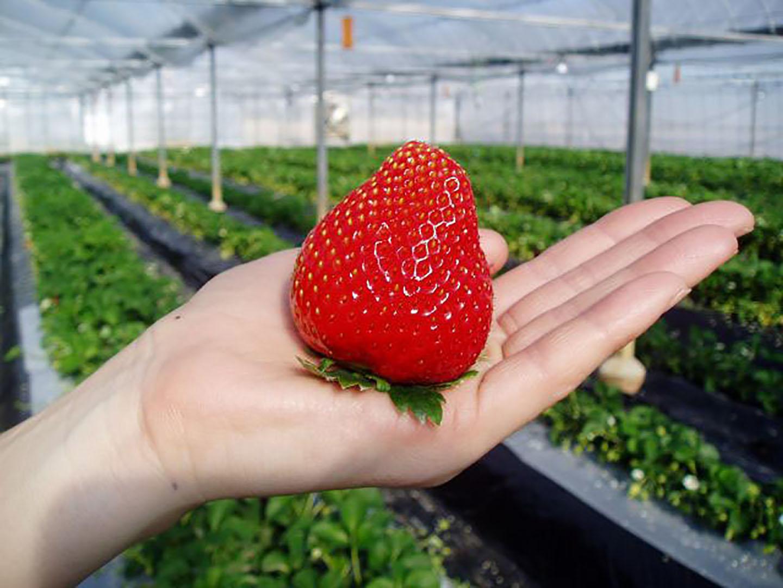 도쿄 근교에서 자연 속 힐링, 싱싱한 과일 따먹기 체험!