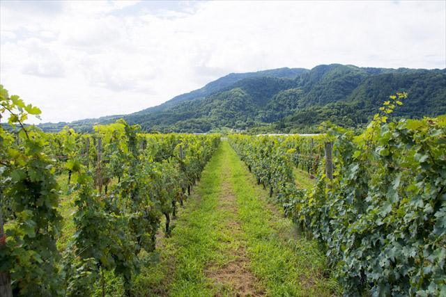 Cave D'Occi Winery