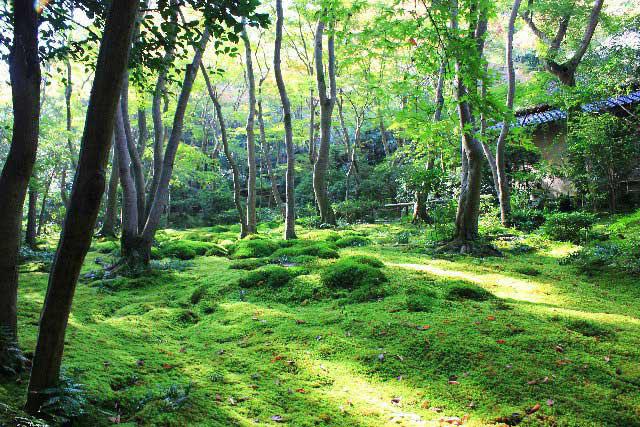 祇王寺の苔庭