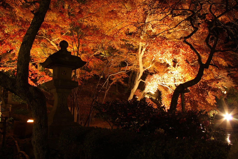 【2020秋】神奈川県の古都「鎌倉」で見る紅葉10選|アクセス・ライトアップ情報も