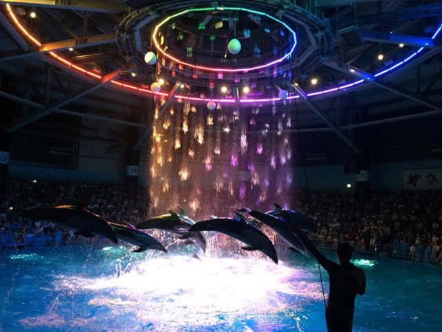 品川プリンス マクセルアクアパーク品川 幻想的で美しいイルカのショー
