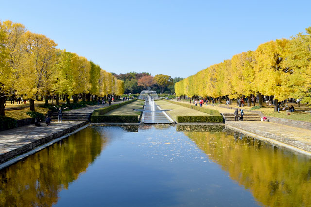 国営昭和記念公園 イチョウ並木の見どころのひとつ