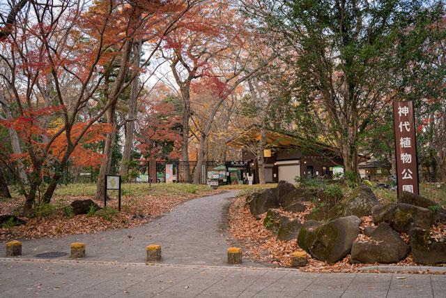 神代植物公園 紅葉も楽しめる
