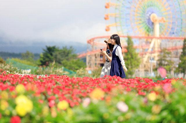 富士山の裾野 天空の花畑 春のお花も絶景