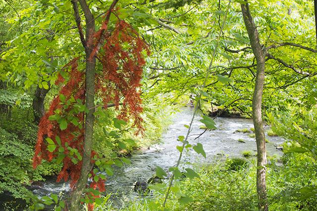 白糸の滝から流れる「湯川」。水の透明度は抜群です。