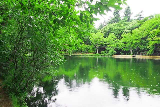 遊歩道から見た雲場池