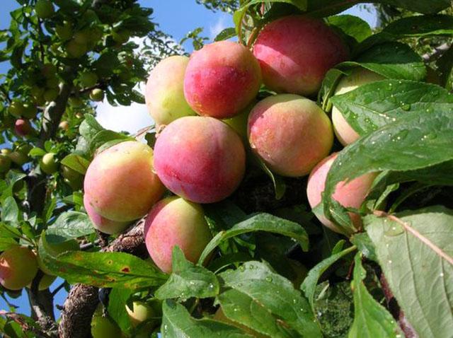 採れたての旬の果実や野菜を楽しめる貴重なスポット。