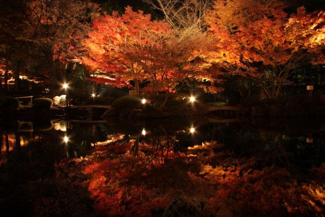 大田黒公園 夜の紅葉ライトアップ