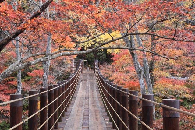 花貫渓谷 紅葉