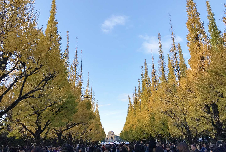 【2020年関東】都内から日帰り可能な紅葉名所30選!|見頃&イベント情報も