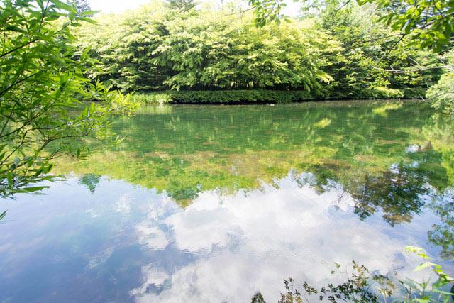 軽井沢を代表する景勝地のひとつ「雲場池」