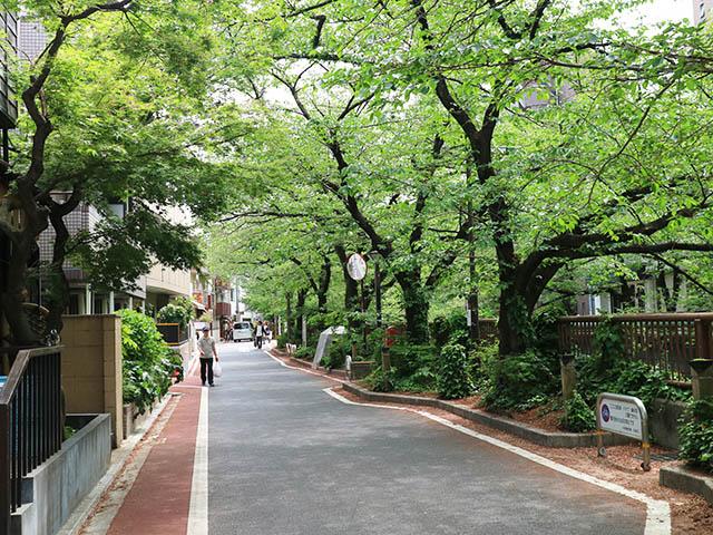 目黒川の桜並木 5月上旬