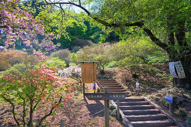 「宝登山神社奥宮」への階段
