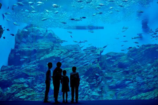 ファミリーにもカップルにも友達同士にもぴったりの水族館