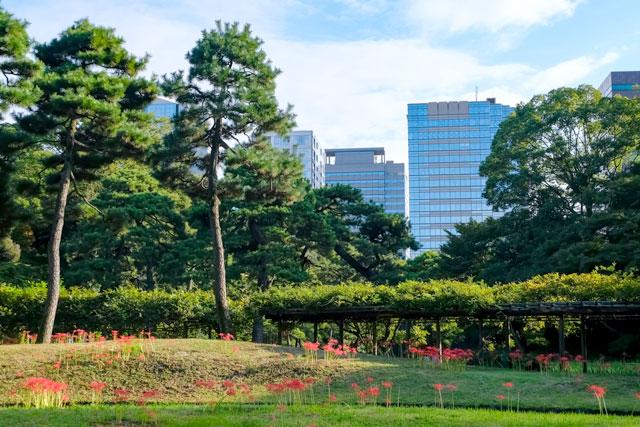 小石川後楽園 近代ビルと自然のコントラストを楽しんで