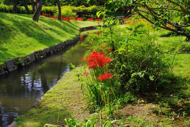 小石川後楽園 小川沿いに咲く彼岸花