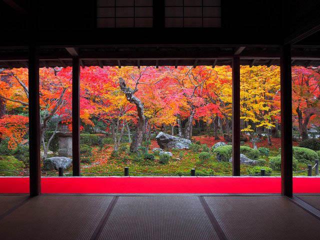 【京都】圓光寺