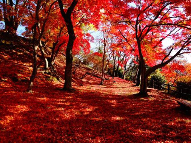 【広島】尾関山公園