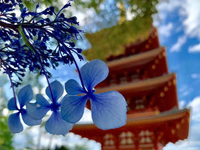 「高幡不動尊」のシンボル五重塔
