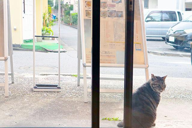 お店の前では可愛らしい猫が休憩中