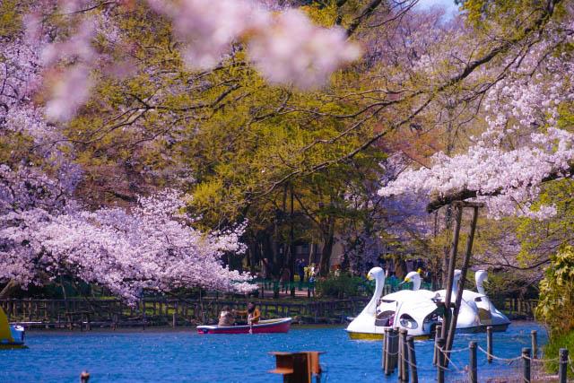 【東京】楽しく美味しくお花見しよう!都内のおすすめ花見スポット10選