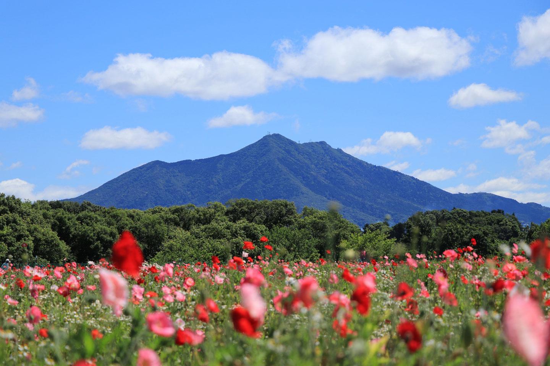【関東】春の美しすぎる「お花畑」15選!3月・4月・5月におすすめの絶景名所
