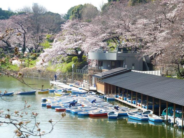 〈LIVE配信中〉全国・桜の名所ライブカメラ5選!自宅でお花見を楽しもう