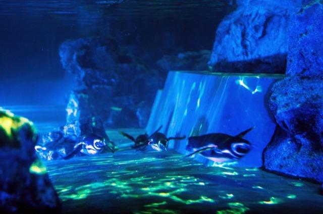 すみだ水族館 2020年7月23日~8月30日の土日祝日に開催中「ペンギン花火」
