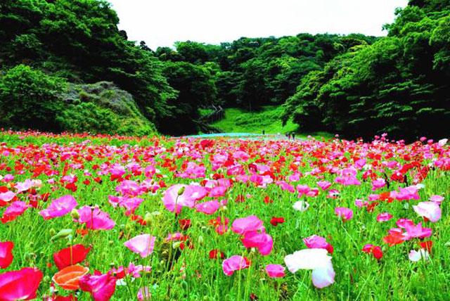 くりはま花の国(春の様子)