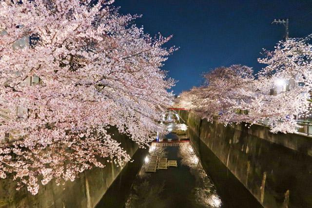 東京都 石神井川沿いの桜並木