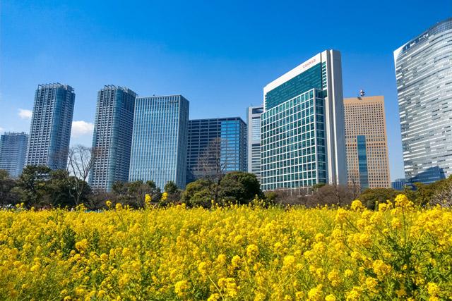 浜離宮恩賜庭園 ビルに囲まれた菜の花畑は東京ならでは