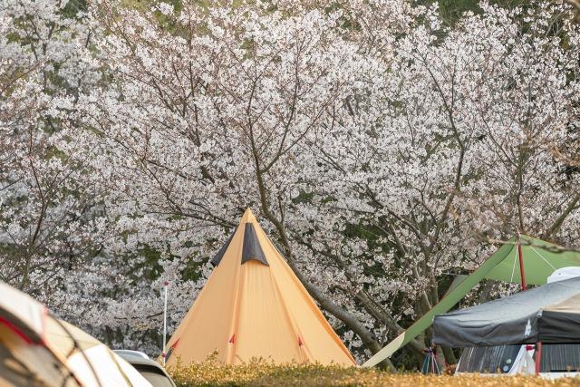 花見キャンプ イメージ