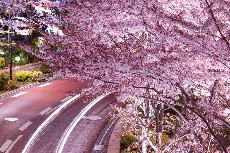 【東京】2021年春はお花見ドライブ!車で出掛けたい都内の桜の名所6選|話題の「お花見タクシー」サービスも