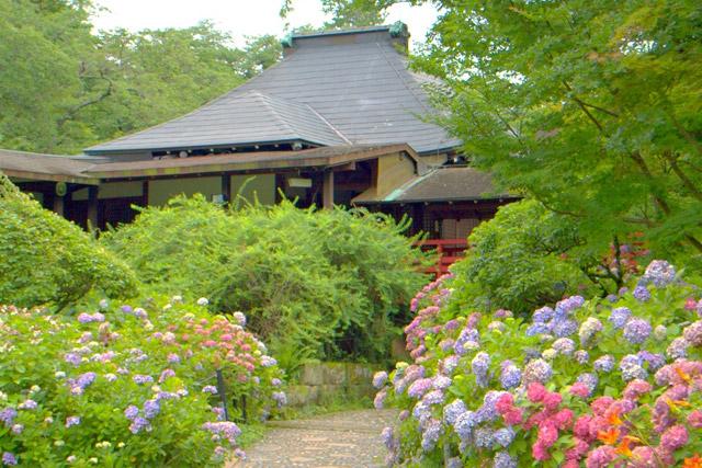 本土寺 歴史深い建物と紫陽花のコラボ
