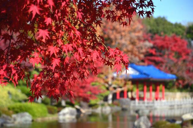 「大仙日本庭園」