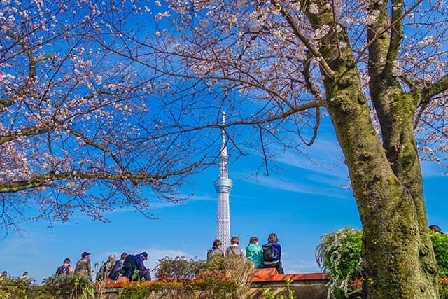 隅田公園は春の桜も有名
