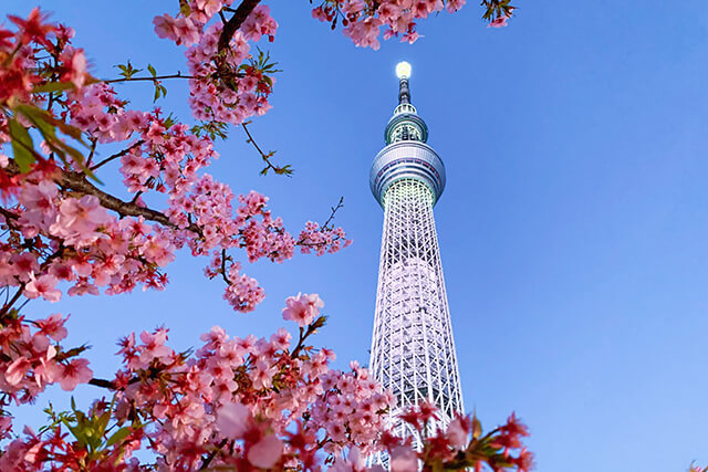 東武橋からの春の眺め