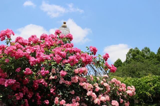 「神代植物公園」バラ園