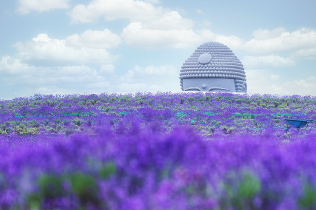 Stone statue of Buddah concealed in the hill of lavender