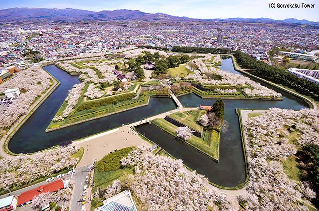 Goryokaku during cherry blossom season in Spring