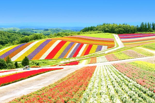 Shikisai no Oka (panoramic flower garden)
