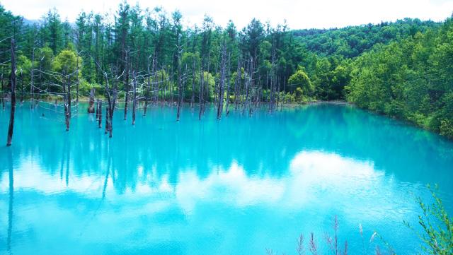비에이- 파란 연못