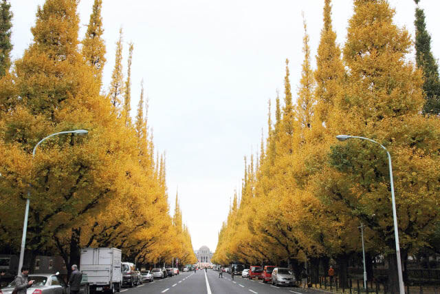 Meiji Gaien Gingko Avenue stretching elegantly straight toward the Picture Gallery