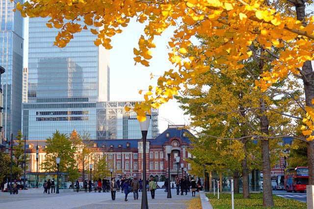 Gingko trees and Tokyo Station