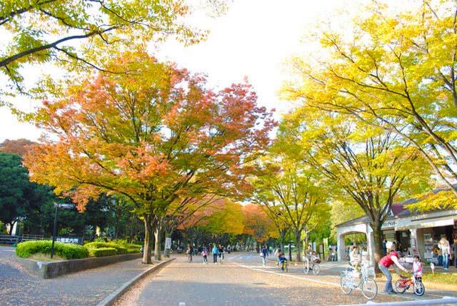 Tree lined path in Komazawa Olympic Park