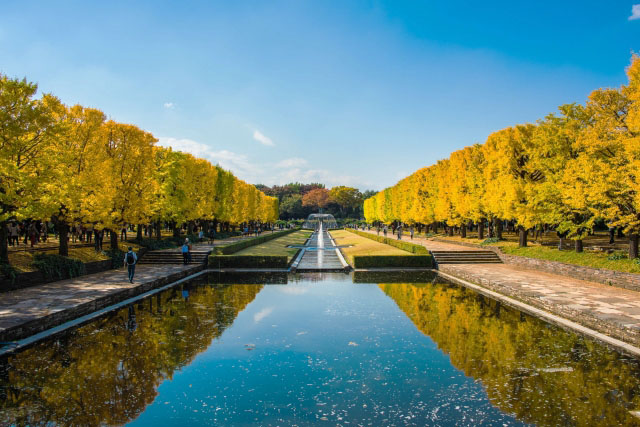 """The Gingko-lined Canal"""